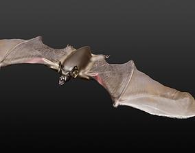 3D model VAMPIRE BAT wildlife-challenge
