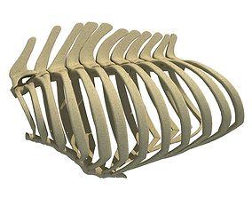 high 3D Animal Rib Cage 099