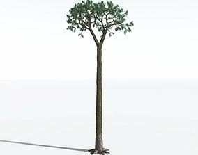 EVERYPlant Spiny Scale Tree SINGLE --1 Model--