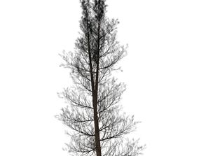 Dead Backyard Pine 3D