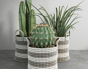 3D Cactus set