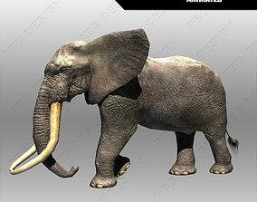 3D asset African Elephant