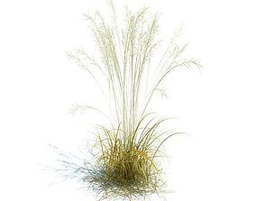 3D model Beach Willow Plant