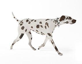 3D model Black Spotted Dog