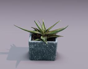 Plant 3D Scan - The Aloe VR / AR ready