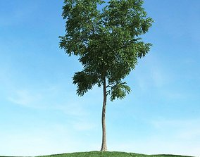Tall Green Leaf Tree 3D tree