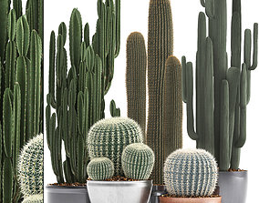 3D model Collection of Exotic Cactus Plants 2