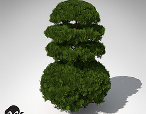 3D XfrogPlants Golden Oriental Arborvitae