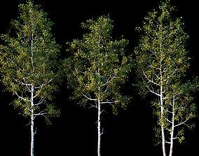 landscape 3D QUAKING ASPEN 01