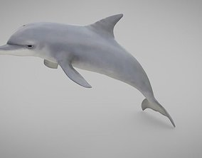 Dolphin 3D model low-poly