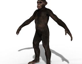 Low Poly Monkey Ape Chimp Chimpanzee Primate 3D asset 1