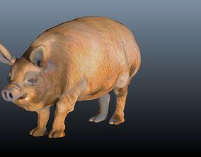 The hog 3D