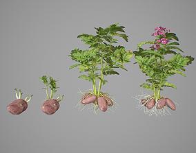 Potato tuber set 3D model