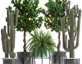 Collection of ornamental plants 3D model