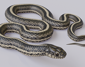 3D asset Animated Garter Snake