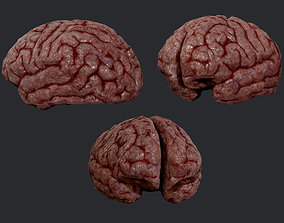 3D asset Human Brain Organ Game Ready 02