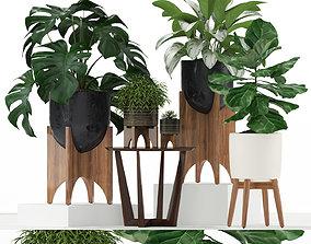 3D model Plants collection 187 westelm