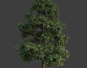 XfrogPlants Common Oak - Quercus Robur 3D
