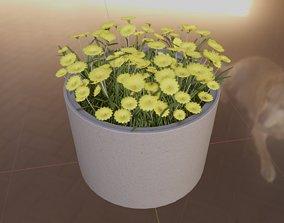 3D model Concrete Pot 1000mm with Yellow Flowers Version 2