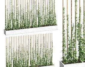 Ivy partition in a rectangular pot - 2 models 3D