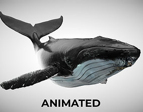 Humpback Whale - with Octane Support 3D asset