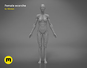 Female ecorche - 3D PRINT MODEL