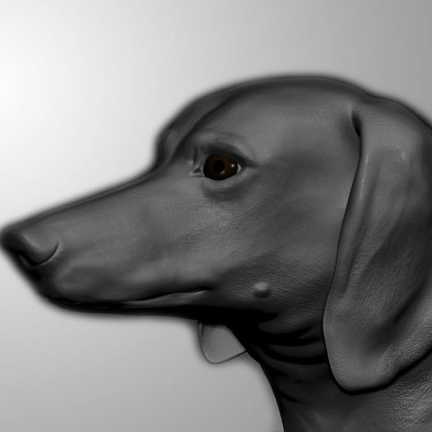 Dachshund Dog Model