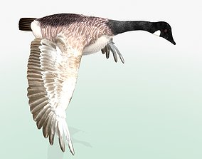 3D Canada Goose - rigged - animated fly