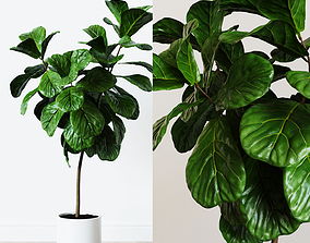 leaf Ficus Lyrata- Fiddle Leaf Fig Plant 3D model