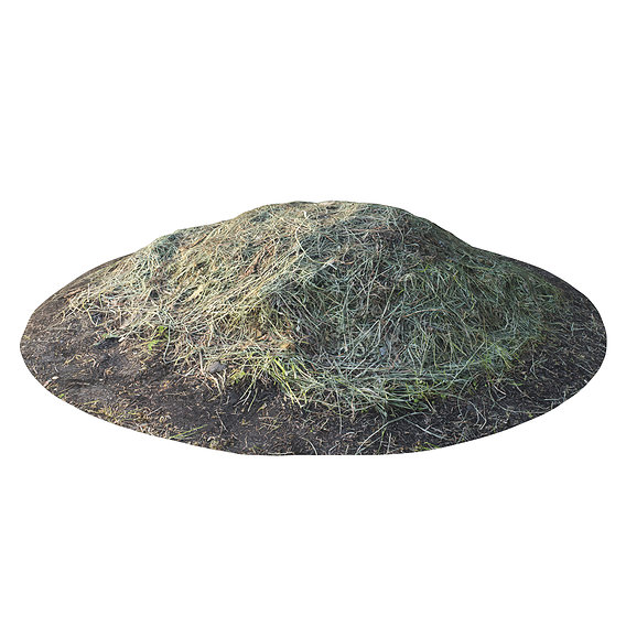 Photogrammetry of Grass