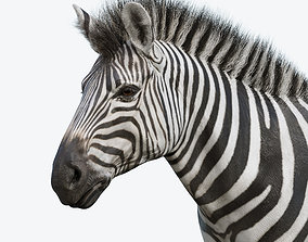 3D asset game-ready Zebra
