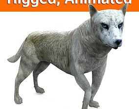 animated 3d White Wolf rigged and animated