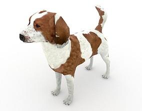 Beagle dog 3D asset