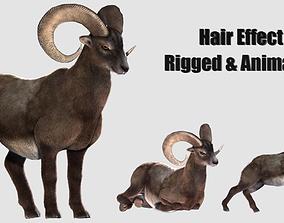 3D model ram goat sheep lamb hair effected