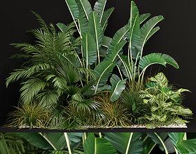 planter Plants collection 237 3D model