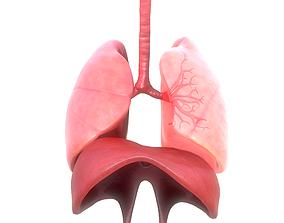 Human Respiratory System Animation 3D asset