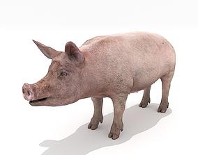 3D asset Realistic Pig