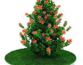 Flowering Bush 3D model