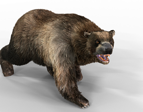 3D asset Black Bear Fur animated