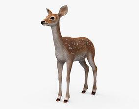 Deer Fawn HD 3D