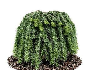 3D Lush Outdoor Plant