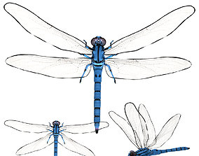 Dragonfly 3D model rigged low-poly