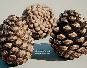 3D Pine-Cone Model - SubstanceDesigner-Extractor Asset - 2