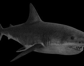3D asset realtime White Shark whiteshark