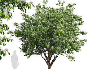 Set of Flowering Kousa Dogwood or Cornus kousa Trees 3D 2