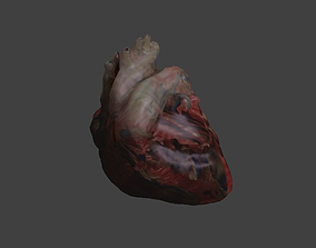 Low Poly Human Heart 3D model