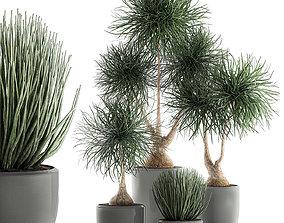 3D Beaucarnea recurvata in a flowerpot for interior design