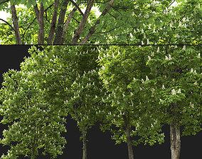 3D model Chestnut-tree 04 H15-17m