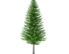 3D model Norway Spruce Picea abies 8m