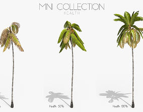 Coconut Palm Tree 3698 - Health Collection 3D asset